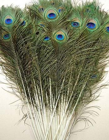 Pávatoll - GREEN/BLUE